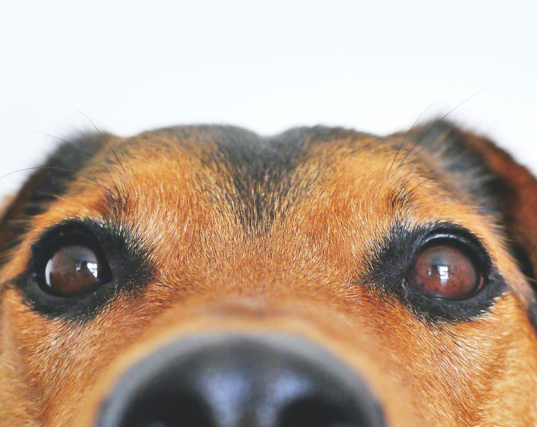 如何「看見」而非「賤看」動物?
